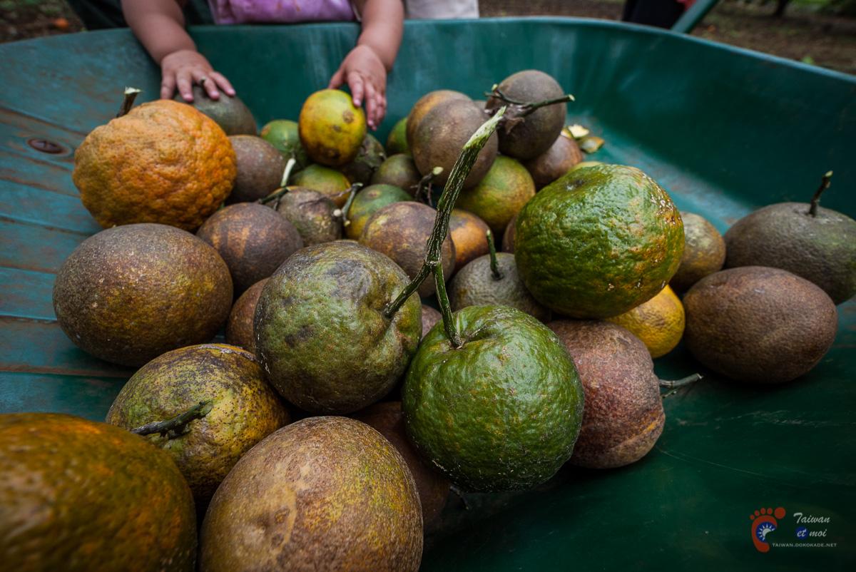 Oranges - Tahiti
