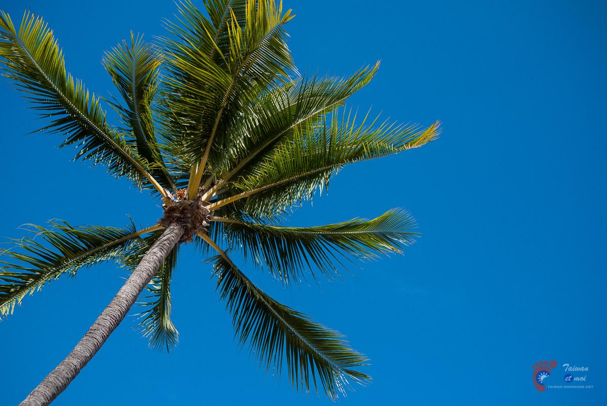 Palmier au Sofitel