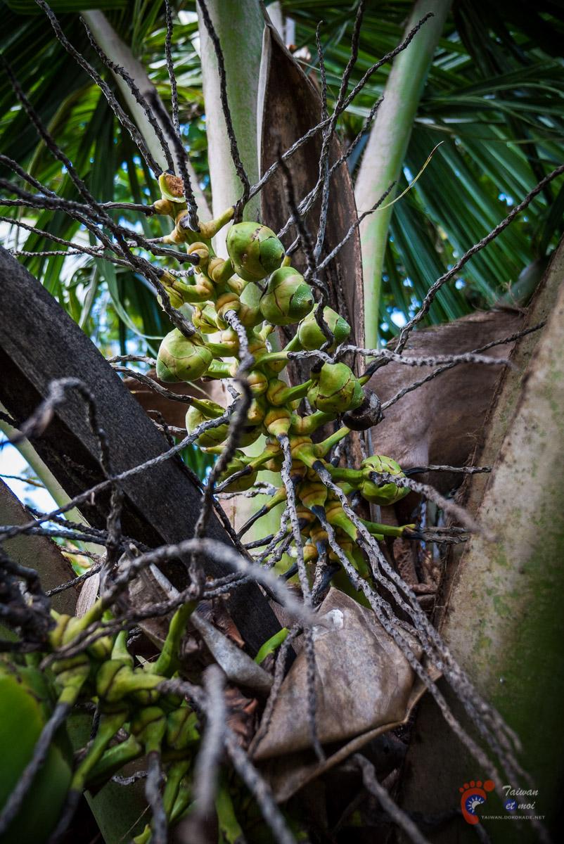 Fleur de cocotier - Tahiti